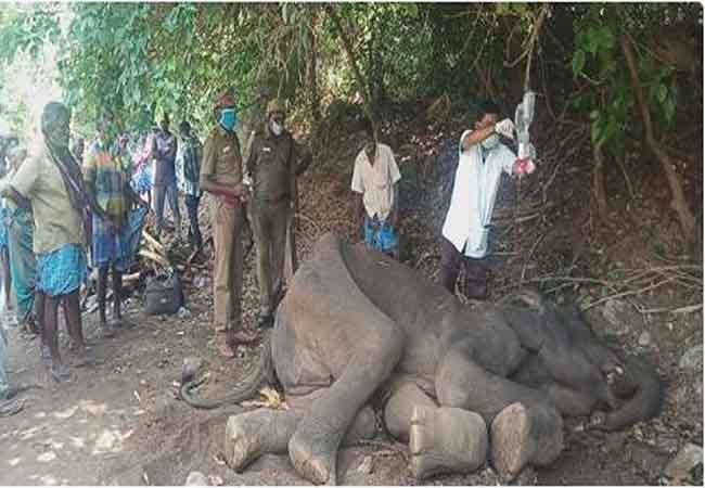 salem districu elephant forest officers and veterinary doctors