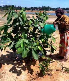 pudukkottai district youths trees small forest