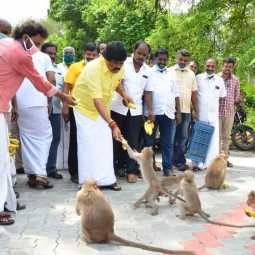 tamilnadu minister rajendra balaji provide foods for animals