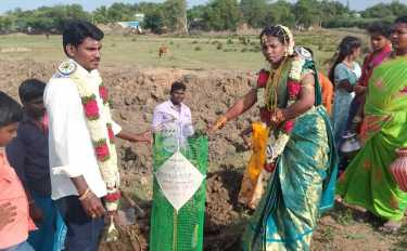 Newly married couples Planted saplings