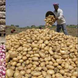 Potatoes in the race after the onion ... !! price hike