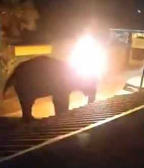 elephant incident in nilgirs