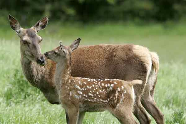 People caught by police in deer case...