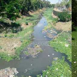 Sewage mixing in the canal in Udayakonda ;chief minister  was the first to acknowledge the truth in the assembly!