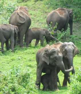 reason behind botswana elephant incident