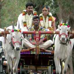 The culture of the  couple is the unchanging 'cow-cart' journey