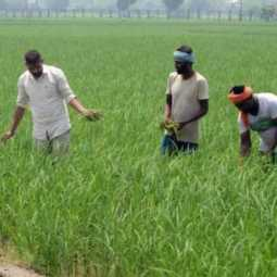 punjab passes bill against farm laws