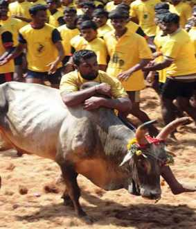 jallikattu won by 2 members