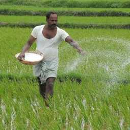Farmers struggle in the field condemning the rise in fertilizer prices