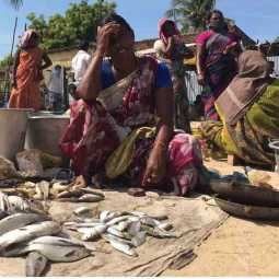 ramanadhapuram district fish sales womens summer