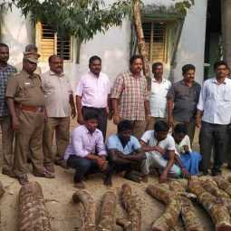 3 tons of red wood seized ... 5 arrested