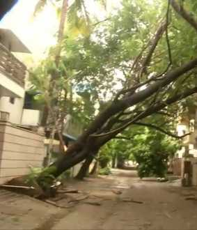 nivar cyclone heavy rains trees chennai municipality corporation
