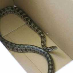 snake in courier parcel box