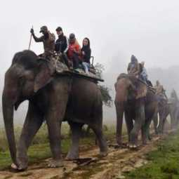 elephants case chennai high court  Change in Session of Expert Panel