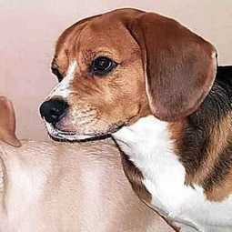 mumbai man airconditiones his house for dogs