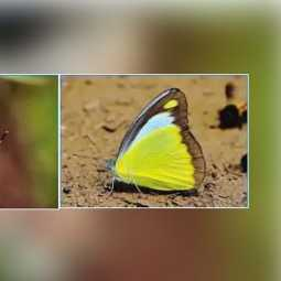 salem forest area butterfly increase forest officers said that