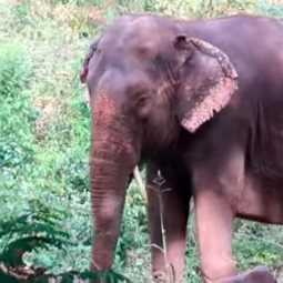 salem andal elephant incident fagan forest department investigation