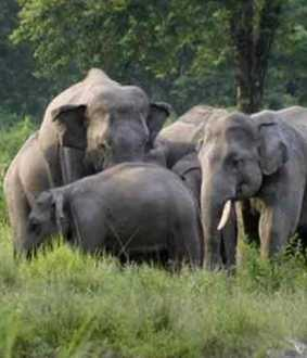 561 elephants passed away in last 6 years ... Tamil Nadu Forest Department's shocking response!