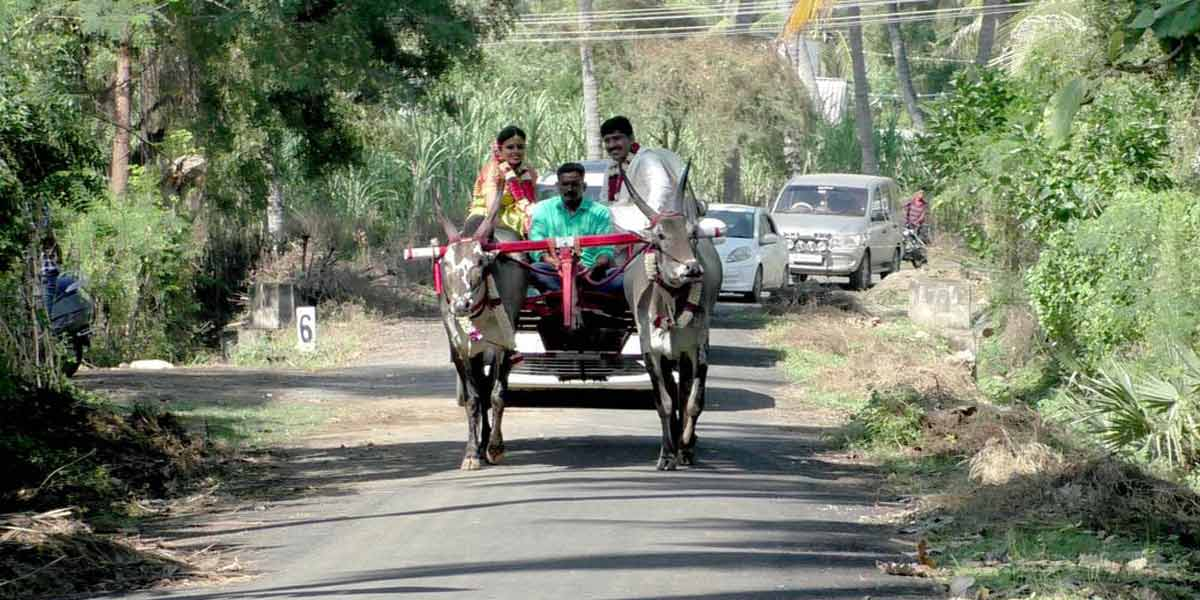 Cow cart ride of educated brides ...!
