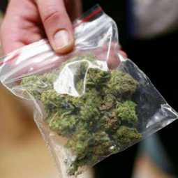 cannabis suppliers college students arrested in chennai