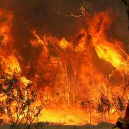 pregnant woman helping to fight with australia bushfire