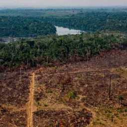amazon deforestation fastened in corona period