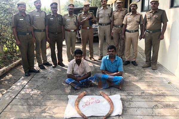 elephant tusks seized
