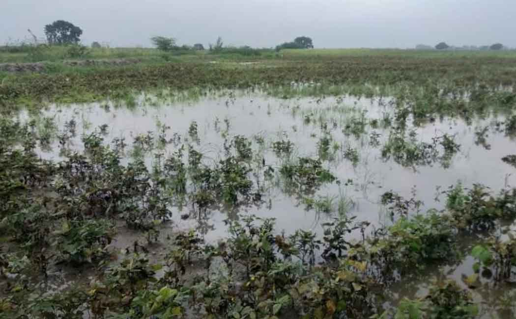 its very worst pongal for virudhunagar farmers