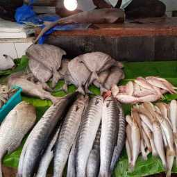 tamilnadu fish sales tn government