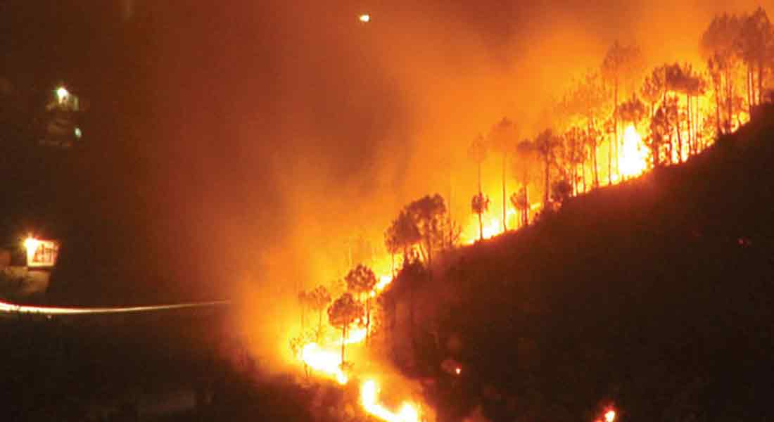 Wildfire in theni...Will the forest department  take action?