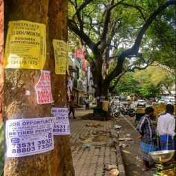 Three years jail  for billboards in trees ...Chennai Corporation Warning