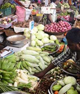 Pongal Festival-Vegetable prices high