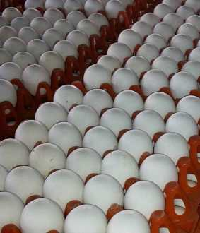 namakkal egg price necc new method announced
