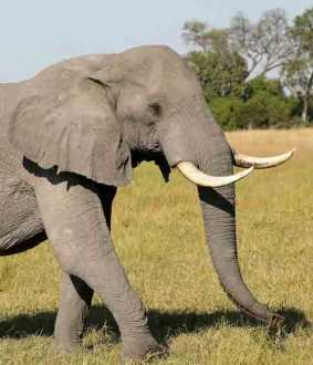 botswana elephant death issue