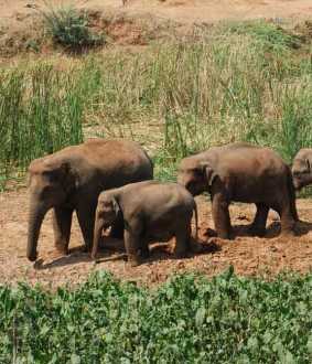 coimbatore forest area elephants
