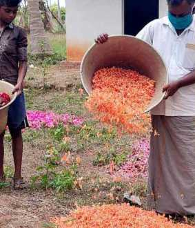Flowers that go to the trash ... Merchants who stop buying ... Farmers in tears !!