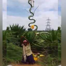 SIVAGANGAI DISTRICT SNAKE SHAPE Cactus WOMEN SNAKE DANCE