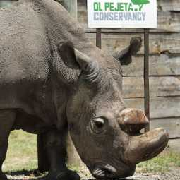 Sudan the last rhino