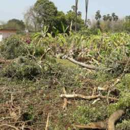 Farmers protest against the road for destroyed Banana plantation