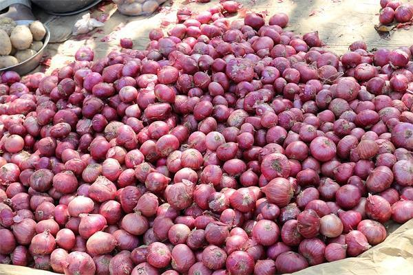 ONION EXPORT STOP UNION GOVERNMENT DECISION PRICE RAISED