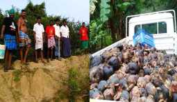 5 thousand palm seeds and 50 royal seeds are planted by naam tamilar in the river banks