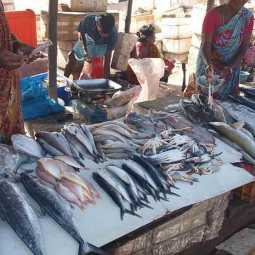 Chennai fish rate high