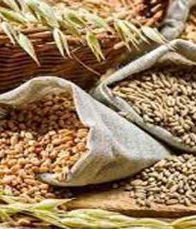 How much food grains are allocated to state governments? -Federal Government ordered to respond!