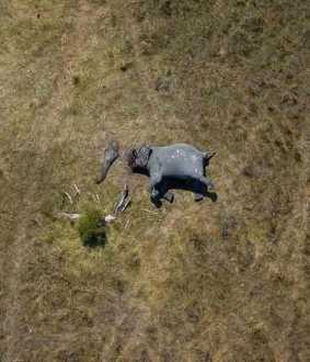 african elephants viral photo disconnection