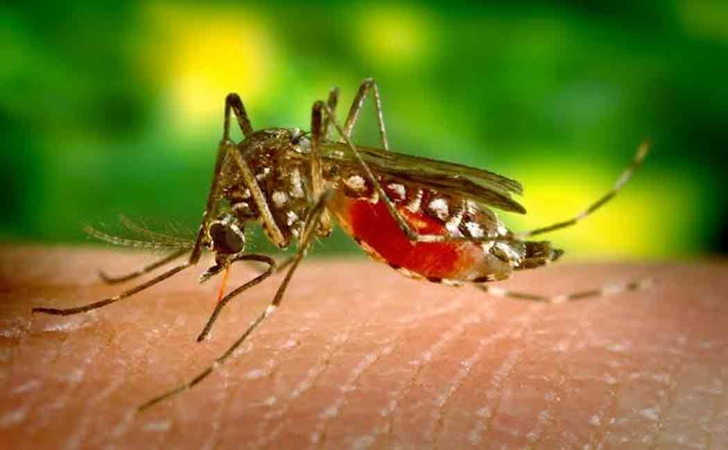 dengue fear in vellore