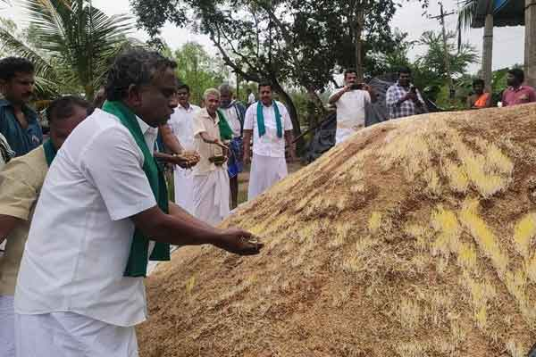 Paddy bundles that started sprouting in the rain ... Echo of Nakkeeran news ... Purchase started ..