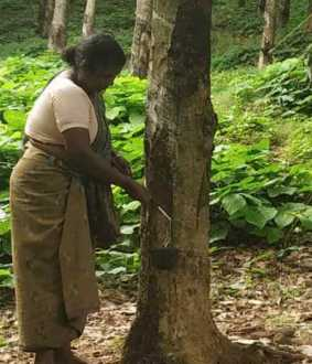 Rubber plantation Employees are talk Wage increase