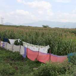 Color fences in sarees to protect crops from wild boars!