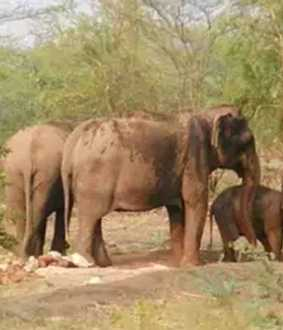 erode district sathyamangalam forest elephant incident