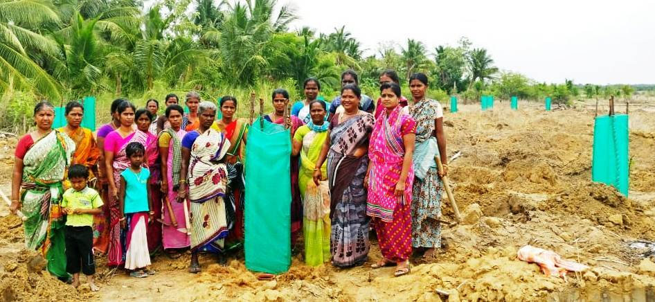 village women's who are Poured the water to grow the trees in pudukottai